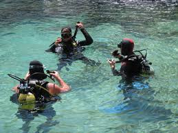 MONITOR-BUCEO