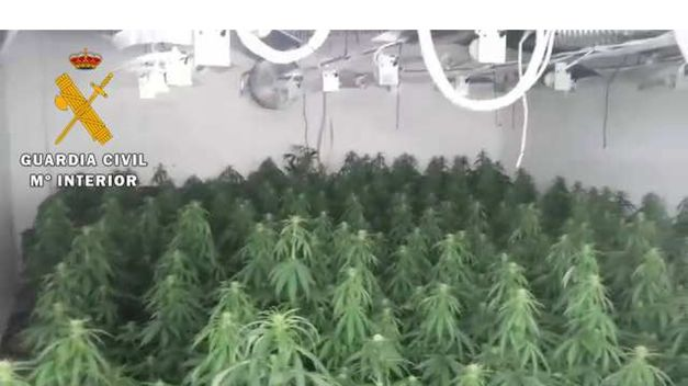 Guardia-Civil-intervenirles-marihuana-vivienda