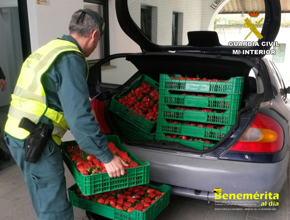 guardia-civil-huelva-robo fresas 1 Usecic