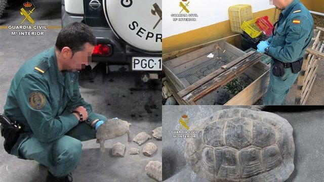Guardia-Civil-veintena-tortugas-Murcia