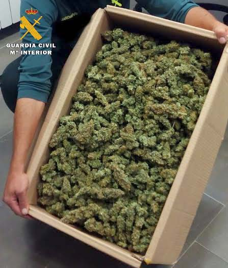 MARIHUANA-GUARDIA CIVIL BENABRE