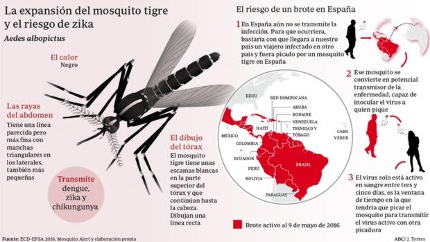mosquito-tigre-expansion