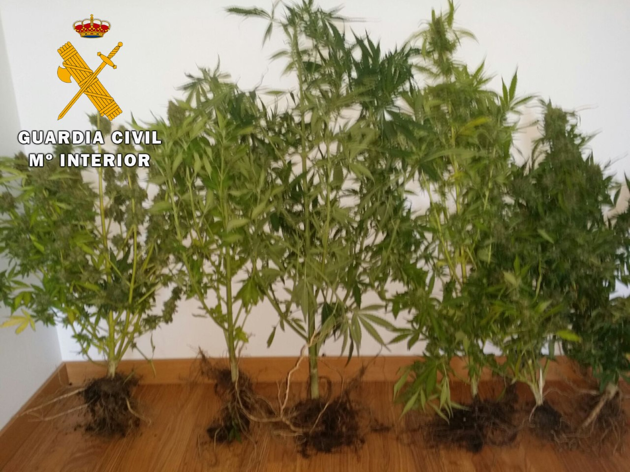 guardia civil avila-18-08-16-Marihuana