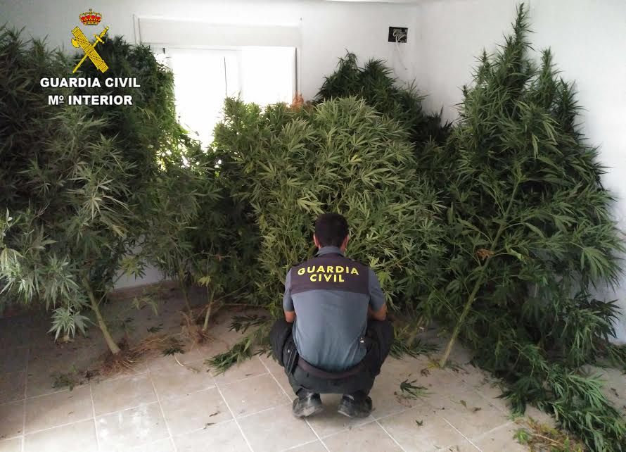 guardia-civil-huelva-marihuana