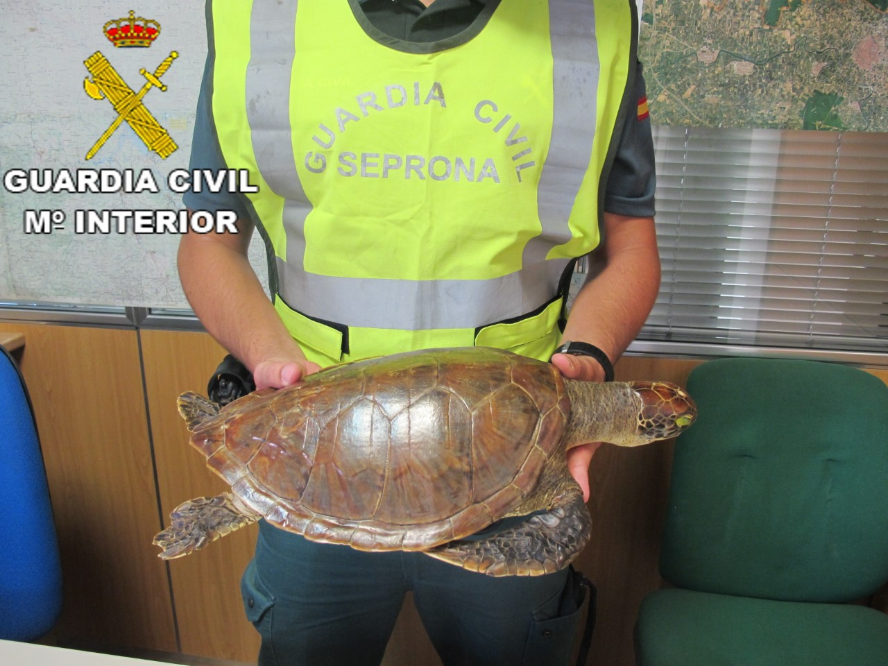 guardia civil seprona- foto tortuga Carey